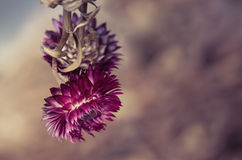 Flowers in Winter with Deep Color and Beautiful Bokeh Stock Photos