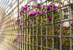 Flowers among wire net fence Royalty Free Stock Images