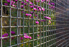 Flowers among wire net fence Royalty Free Stock Photography