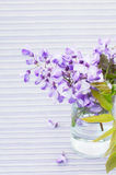 Flowers of wisteria. Bouquet of wisteria in a glass vase on stripe violet background, close-up Stock Image