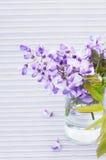 Flowers of wisteria Stock Image