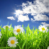 Flowers With Grassy Field On Blue Sky Stock Photo