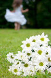 Flowers woman chrysanthemum. Bouquet of white chrysanthemum with woman in white dress running in background royalty free stock photo