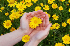 Flowers in womans hands Stock Photo