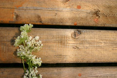 Flowers on Wood royalty free stock photo