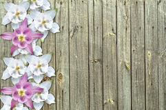 Flowers on wood background Stock Images
