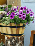 Flowers in wood bucket Royalty Free Stock Photography