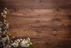 Flowers on wood texture background Stock Image