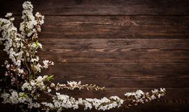 Flowers on wood texture background Stock Images