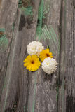 Flowers. On a wooden background Royalty Free Stock Image