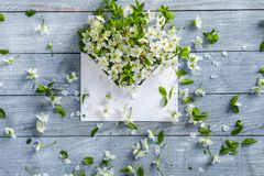 Spring flowers on blue wooden background. Springtime and nature concept. love background. Flowers on wooden background. envelope with a spring flower arrangement stock photos