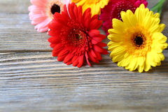 Flowers on a wooden background Stock Image