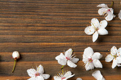 Flowers on wooden background, grain wood. Texture stock photography