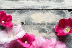 Flowers on wooden background. Pink hollyhock flowers on wooden background with copy space. Top view Stock Photography