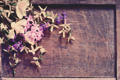 Flowers on wooden background Stock Image
