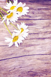 Flowers on a wooden background Royalty Free Stock Photo