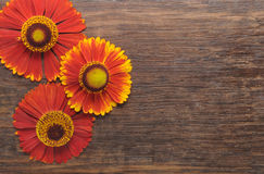 Flowers on a wooden background Stock Photos