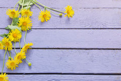 Flowers on wooden background Royalty Free Stock Photo