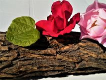 Flowers on a wooden log stock images