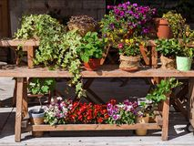 Flowers on a wooden bench Stock Image