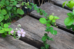 Flowers and wooden boards Royalty Free Stock Images