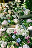 Flowers in wooden boxes Royalty Free Stock Images