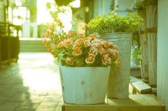 Flowers in wooden bucket Stock Image