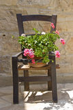 Flowers on a wooden chair Stock Images