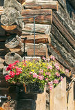 Flowers in wooden planter Royalty Free Stock Photo