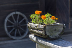 Flowers in the wooden pot Royalty Free Stock Images