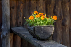 Flowers in the wooden pot Royalty Free Stock Photography