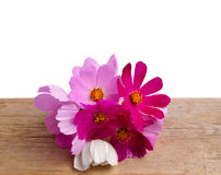 Flowers on a wooden table Stock Image