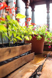 Flowers on wooden terrace Royalty Free Stock Image