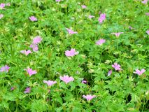 Flowers in the woods at centre parks nottingham UK. Royalty Free Stock Photography