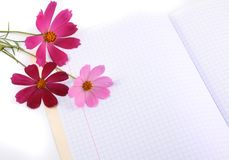 Flowers on a writing-book royalty free stock images