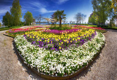 Flowers (tulips, Palms) in the centre of Constance city park with Constance lake (Bodensee) in the background, Stock Image