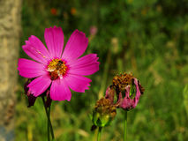 Flowers In XiXi Park royalty free stock photography