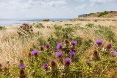 Flowers Xlendi Bay Gozo Stock Image
