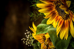 Free Flowers Yellow And Red Sunflower Royalty Free Stock Images - 57567739