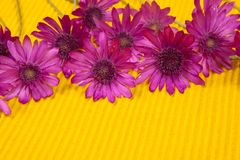 Flowers on yellow background Stock Photos