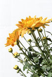 Flowers of a yellow chrysanthemum in a bouquet. On a white blackground Stock Photo