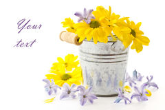 Flowers yellow chrysanthemums and blue hyacinth Royalty Free Stock Images