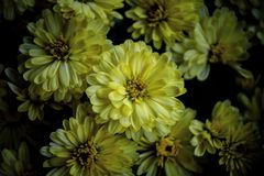 Flowers. Yellow cute flowers stock images