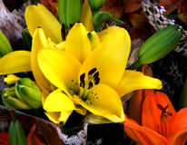 Flowers - Yellow Lillium. Bright bunch of yellow lilliums at the florest ready for someone to buy stock photos