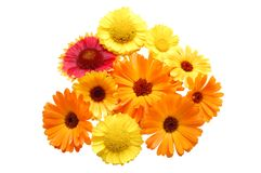 Flowers with yellow petals on a white background Royalty Free Stock Image