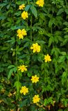 Flowers with yellow flowers to decorate a garden flower bed stock photography