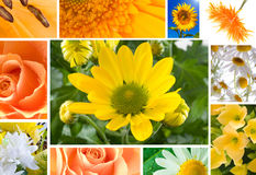 Flowers in yellow tones Royalty Free Stock Photo
