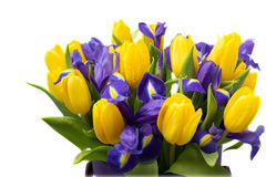 Flowers. Yellow tulip and iris bouquet Royalty Free Stock Images