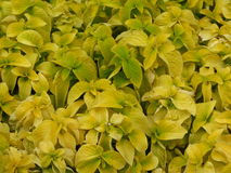 Flowers yellow. In Zheleznovodsk. Summer. Day Royalty Free Stock Image