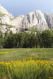 Flowers in Yosemite. Flowers in a meadow with water fall in background royalty free stock image